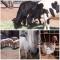 Cruauté envers les animaux : Une violence qui escalade